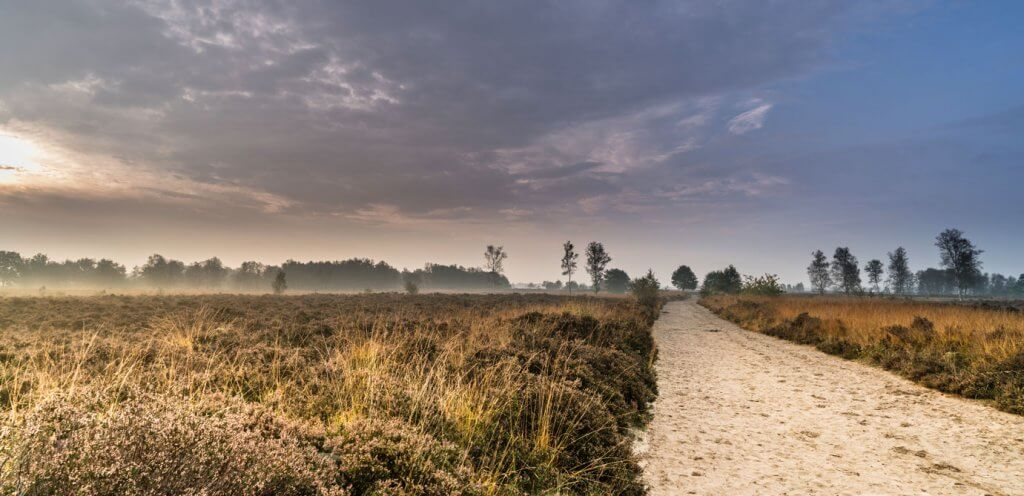 Balloerveld Drenthe. foto Steven Groothuismink.